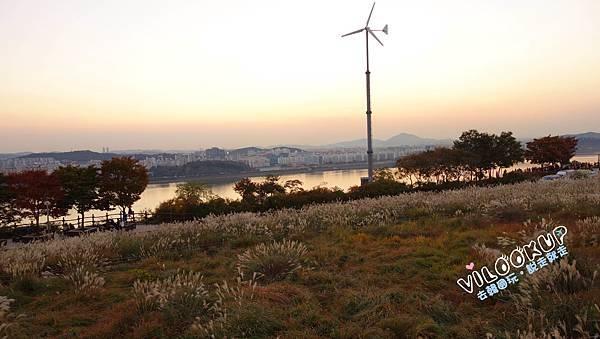 首爾紫芒草慶典서울억새축제天空公園하늘공원0054.jpg
