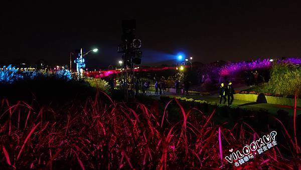 首爾紫芒草慶典서울억새축제天空公園하늘공원0063.jpg