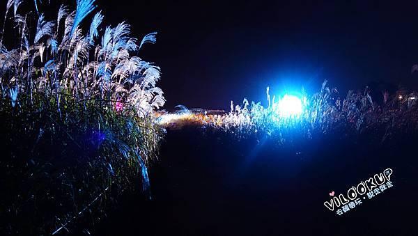 首爾紫芒草慶典서울억새축제天空公園하늘공원0066.jpg