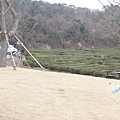 innisfree Jeju house0005.jpg