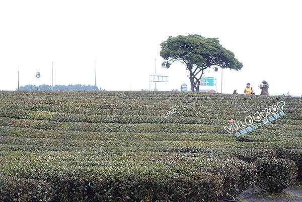 innisfree Jeju house0069.jpg
