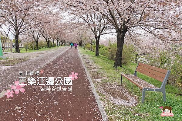 釜山沙上掛法站韓國賞櫻三樂江邊公園삼락강변공원.jpg