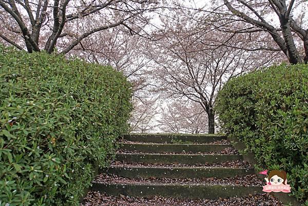 釜山沙上掛法站韓國賞櫻三樂江邊公園삼락강변공원015.jpg