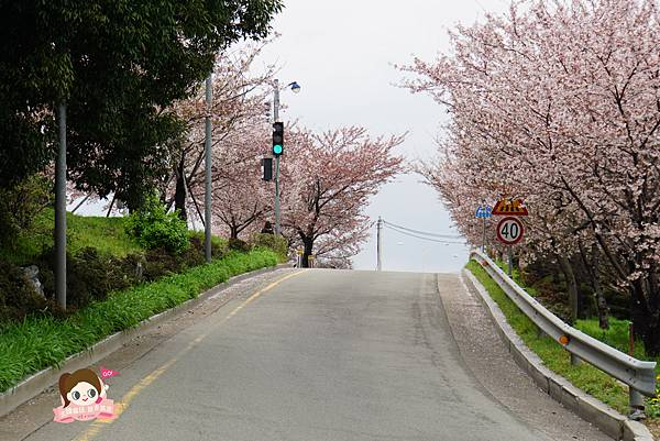 釜山沙上掛法站韓國賞櫻三樂江邊公園삼락강변공원017.jpg