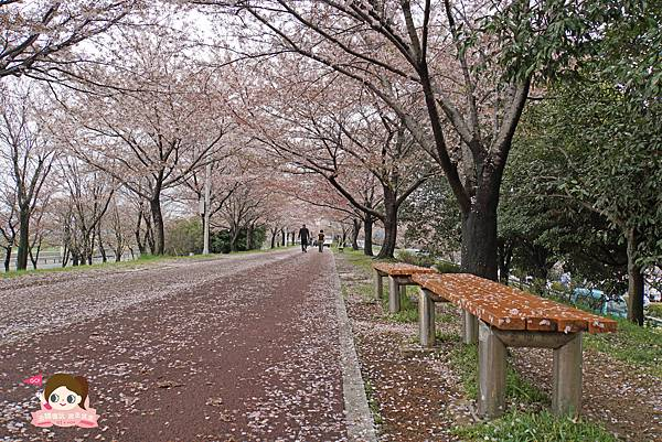 釜山沙上掛法站韓國賞櫻三樂江邊公園삼락강변공원019.jpg