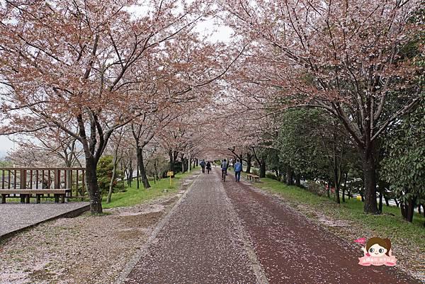 釜山沙上掛法站韓國賞櫻三樂江邊公園삼락강변공원020.jpg