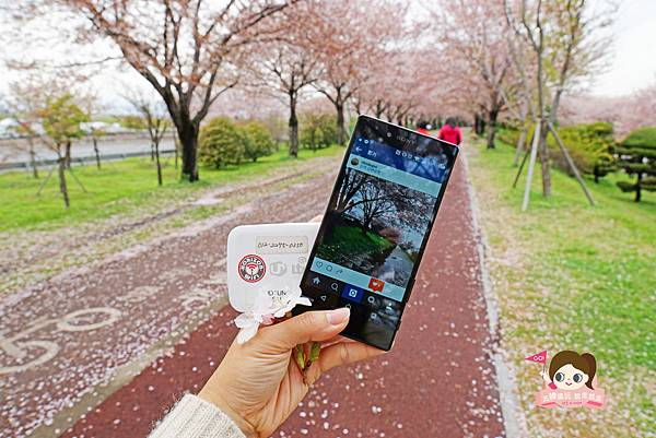 釜山沙上掛法站韓國賞櫻三樂江邊公園삼락강변공원022.jpg