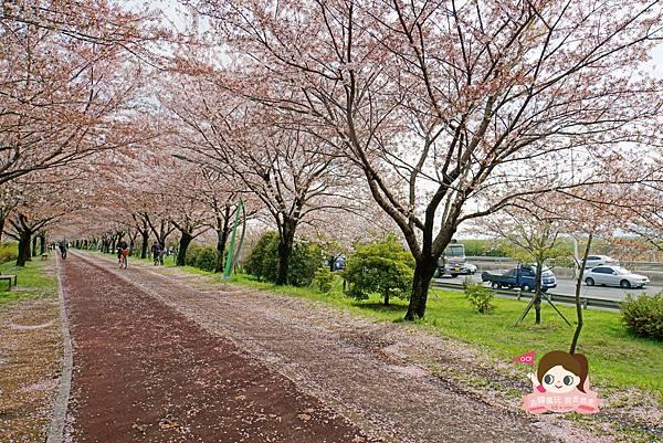 釜山沙上掛法站韓國賞櫻三樂江邊公園삼락강변공원021.jpg