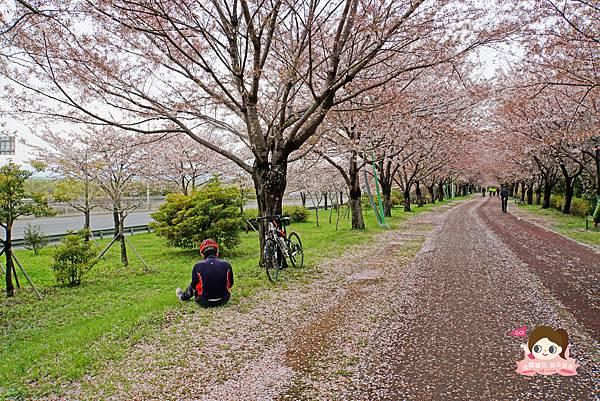 釜山沙上掛法站韓國賞櫻三樂江邊公園삼락강변공원023.jpg