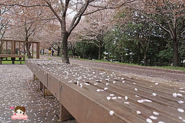 釜山沙上掛法站韓國賞櫻三樂江邊公園삼락강변공원027.jpg
