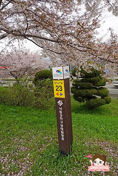 釜山沙上掛法站韓國賞櫻三樂江邊公園삼락강변공원030.jpg