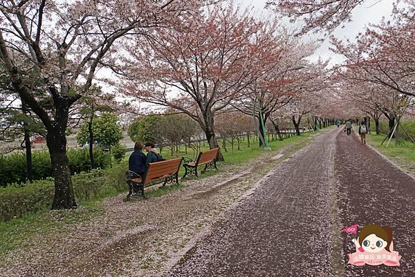 釜山沙上掛法站韓國賞櫻三樂江邊公園삼락강변공원031.jpg