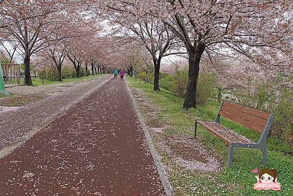 釜山沙上掛法站韓國賞櫻三樂江邊公園삼락강변공원036.jpg