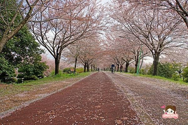 釜山沙上掛法站韓國賞櫻三樂江邊公園삼락강변공원038.jpg