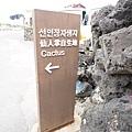 孔劉濟州島月令里仙人掌群落월령리 선인장 군락 (20).jpg