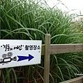 濟州山君不離 산굼부리 (34).jpg