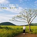 曉星岳極美日落與孤獨的樹 새별오름.jpg