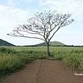 曉星岳極美日落與孤獨的樹 새별오름 (3).jpg