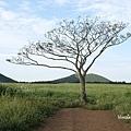 曉星岳極美日落與孤獨的樹 새별오름 (4).jpg