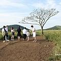 曉星岳極美日落與孤獨的樹 새별오름 (5).jpg