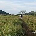 曉星岳極美日落與孤獨的樹 새별오름 (6).jpg