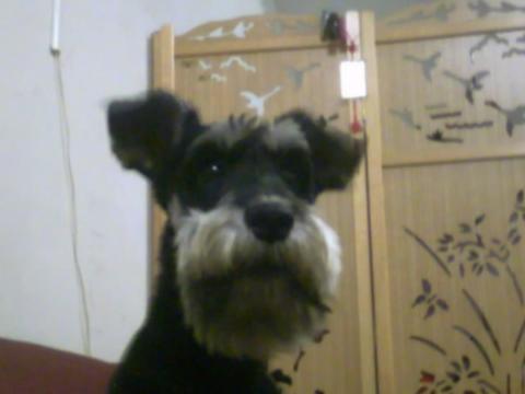 我家的帥氣狗--lucky唷
