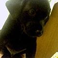 http://pics4.blog.yam.com/19/userfile/v/vincentkao0729/album/14a9f90ff0f57d.jpg