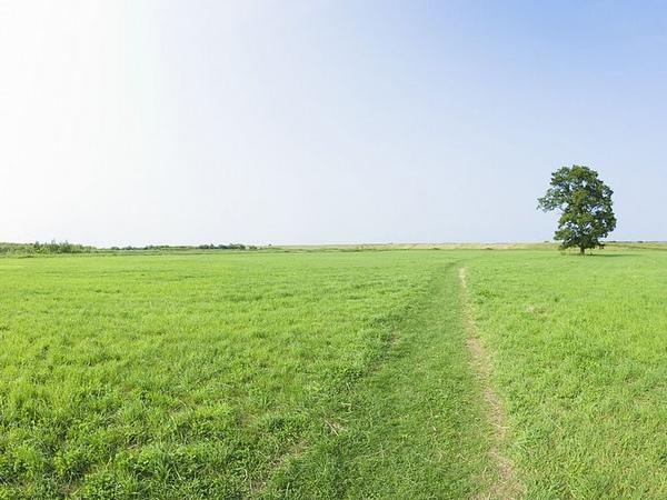 lone_tree_seen_on_a_vast_grassland_JA096_photo.jpg
