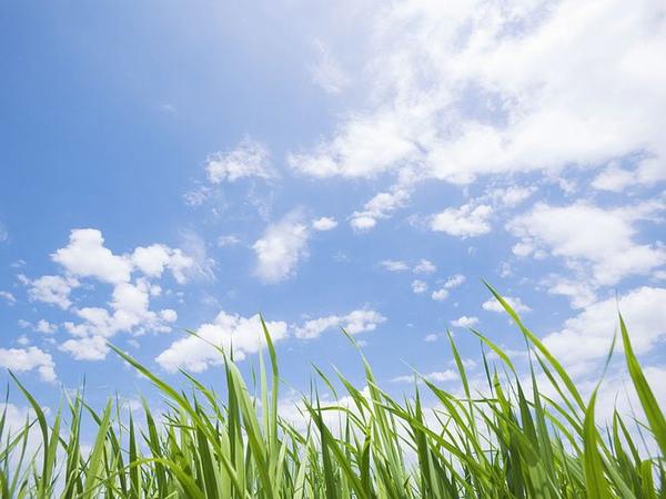 green-grassland-under-sky-photo-024.jpg
