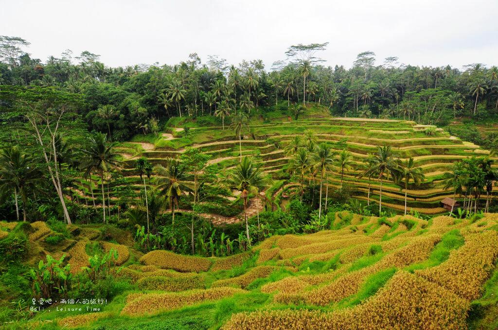Tegallalang Rice Terrace 02.jpg