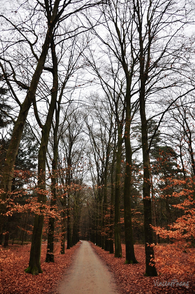 Park Hoge Veluwe KM 25.jpg