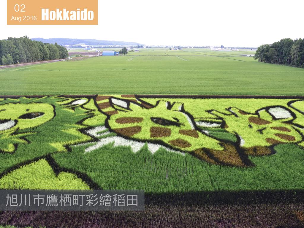 夏日花見北海道 .006.jpeg