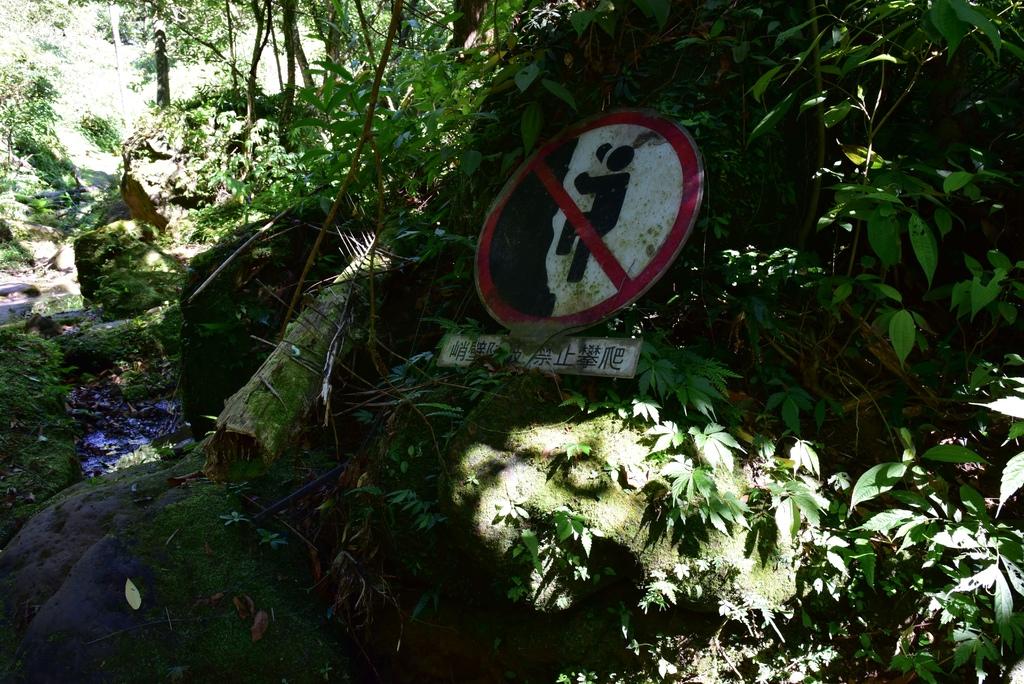 三貂嶺瀑布群步道 30.jpg