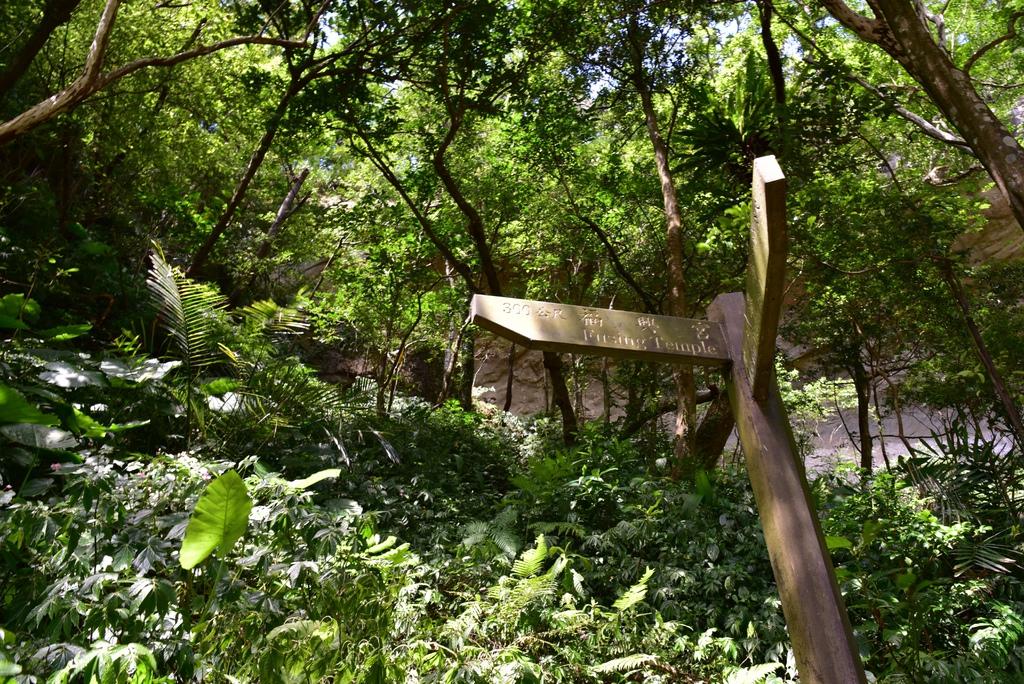 三貂嶺瀑布群步道 47.jpg