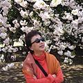 我太太超愛櫻花