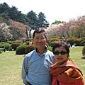 日本人愛賞櫻花