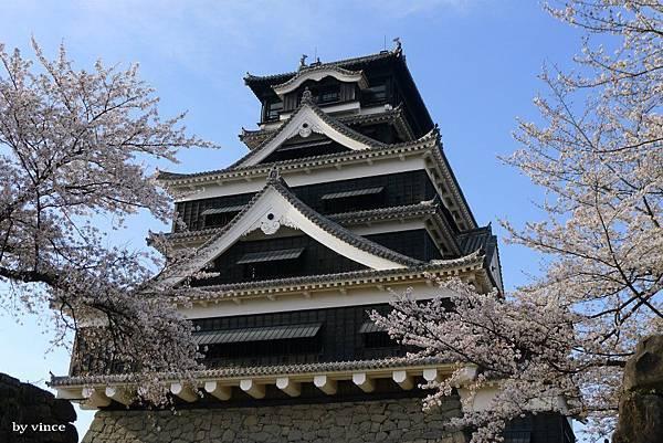 熊本城與櫻花