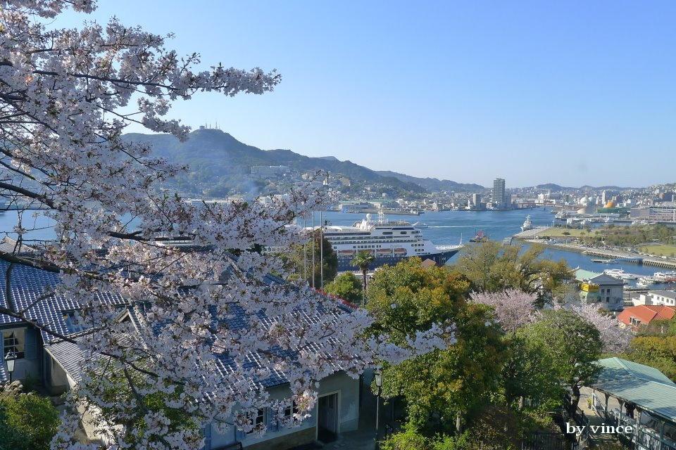 長崎港與櫻花