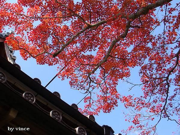 高台寺楓葉