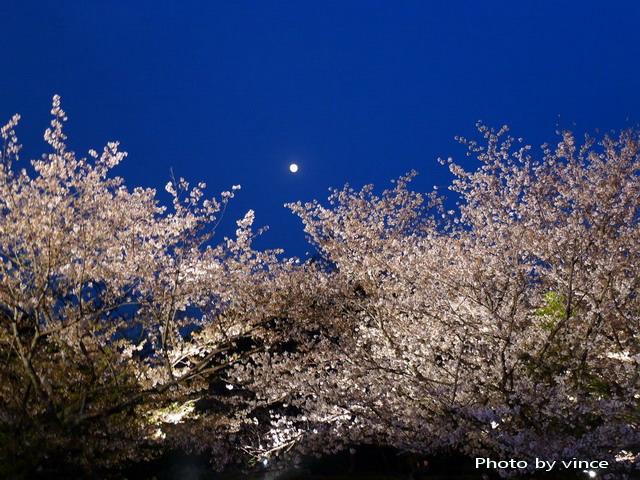 福岡城跡多聞櫓夜櫻