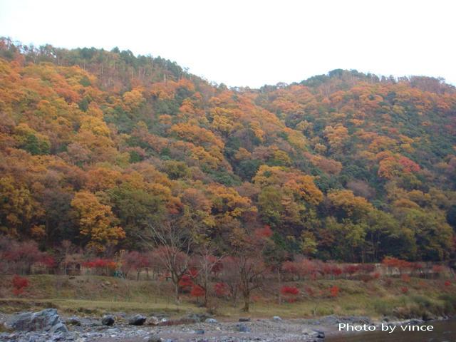 保津川 楓葉