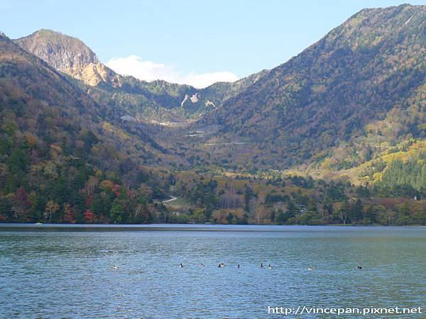 湯之湖 遠山 小鴨