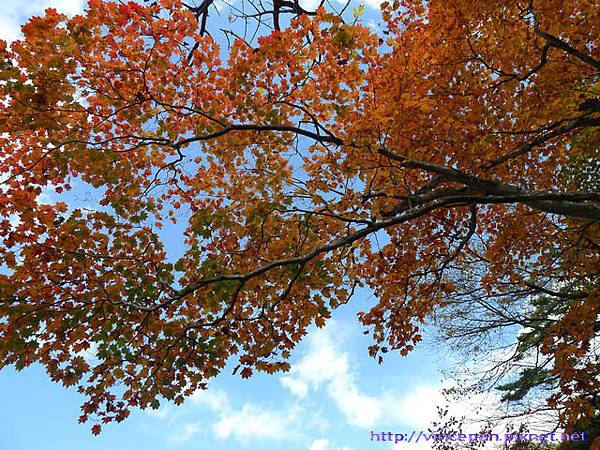 湯之湖 天空紅葉