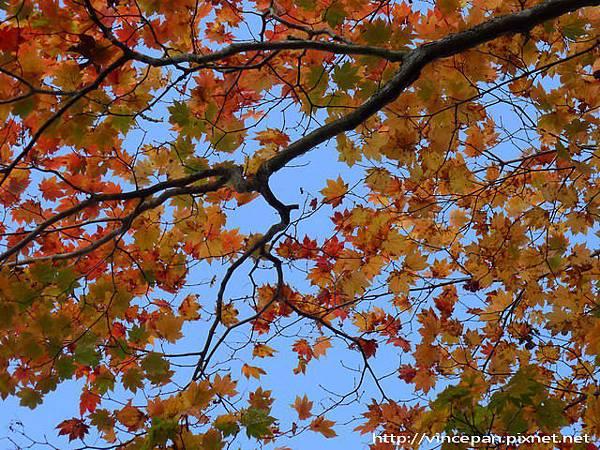 湯之湖 天空紅葉2