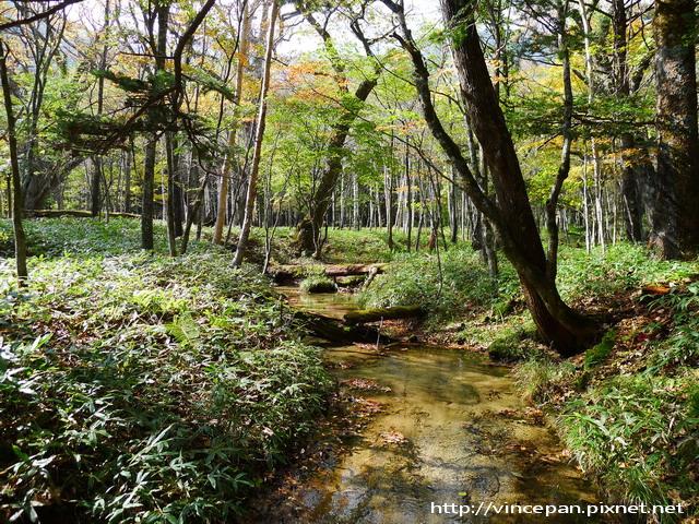 奧日光森林