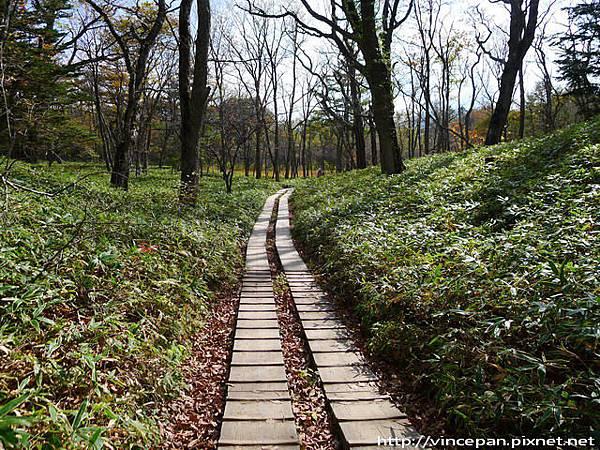 奧日光森林步道2