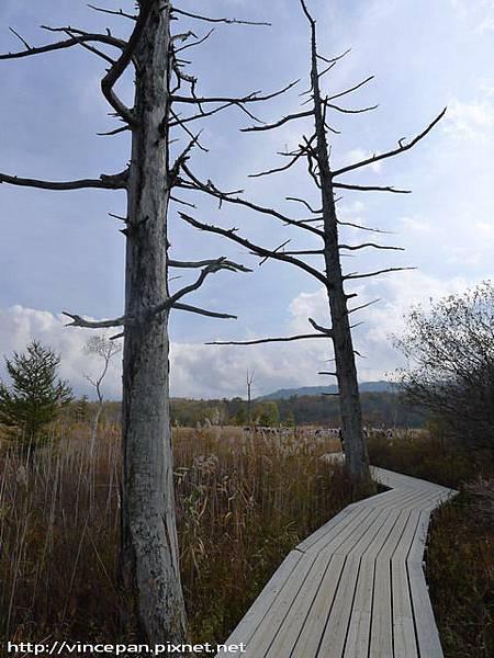 戰場之原自然步道 枯木