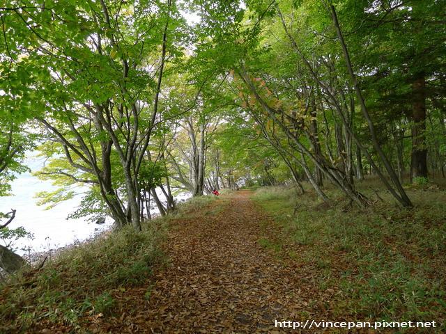 中禪寺湖北岸步道
