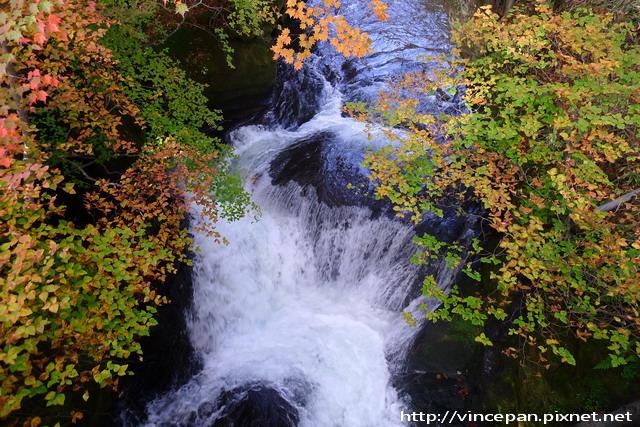 紅葉 水流