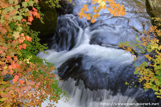 紅葉 水流 2